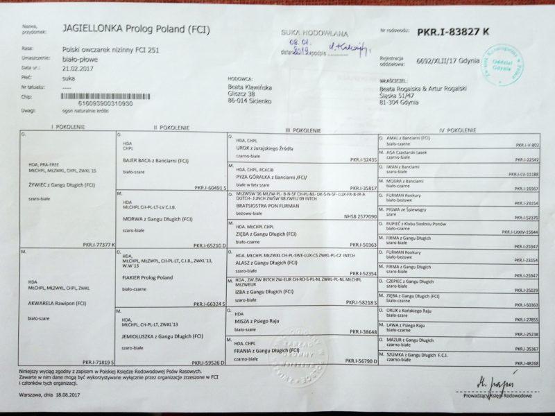 1-1. JAGIELLONKA Prolog Poland (FCI)